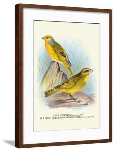 Cape Canary, Sulphur-Coloured Seed-Eater-Arthur G^ Butler-Framed Art Print