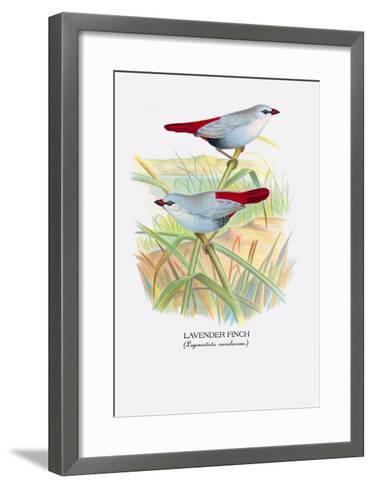 Lavender Finch-Arthur G^ Butler-Framed Art Print