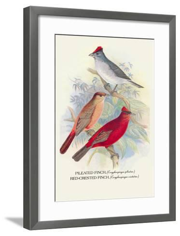 Pileated Finch, Red-Crested Finch-Arthur G^ Butler-Framed Art Print