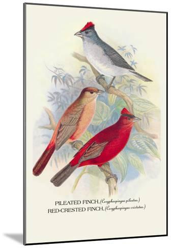 Pileated Finch, Red-Crested Finch-Arthur G^ Butler-Mounted Art Print