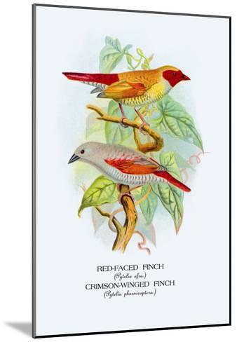 Red-Faced Finch, Crimson-Winged Finch-Arthur G^ Butler-Mounted Art Print