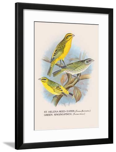 St. Helena Seed-Eater, Green Singing-Finch-Arthur G^ Butler-Framed Art Print