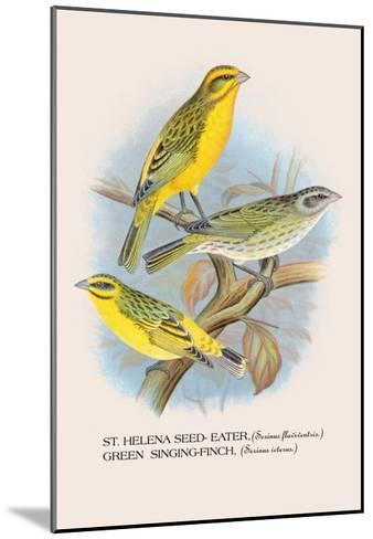 St. Helena Seed-Eater, Green Singing-Finch-Arthur G^ Butler-Mounted Art Print