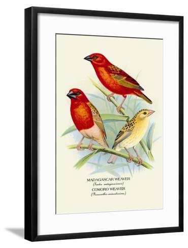 Madagascar Weaver, Comoro Weaver-Arthur G^ Butler-Framed Art Print