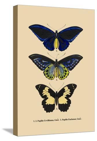 Papilio Urvillianus, Guer--Stretched Canvas Print