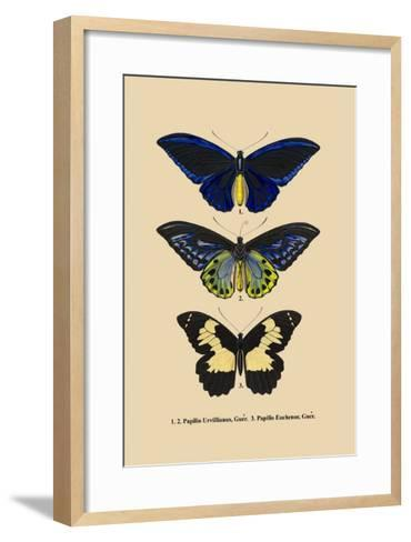 Papilio Urvillianus, Guer--Framed Art Print
