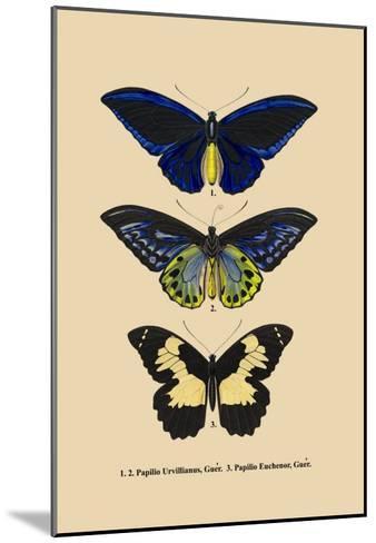Papilio Urvillianus, Guer--Mounted Art Print