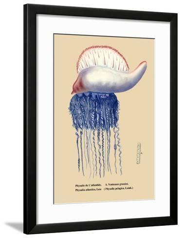Physalie de l'Atlantide--Framed Art Print