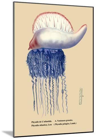 Physalie de l'Atlantide--Mounted Art Print