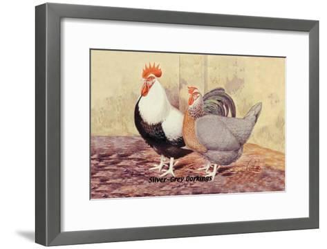 Silver-Grey Dorkings--Framed Art Print