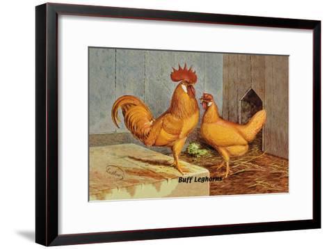 Buff Leghorns--Framed Art Print
