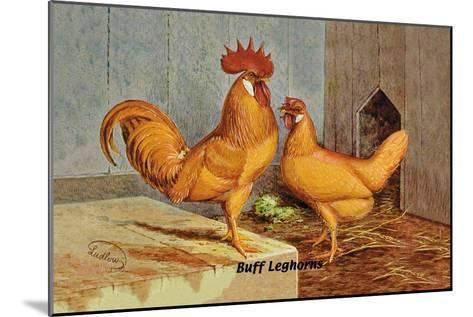 Buff Leghorns--Mounted Art Print