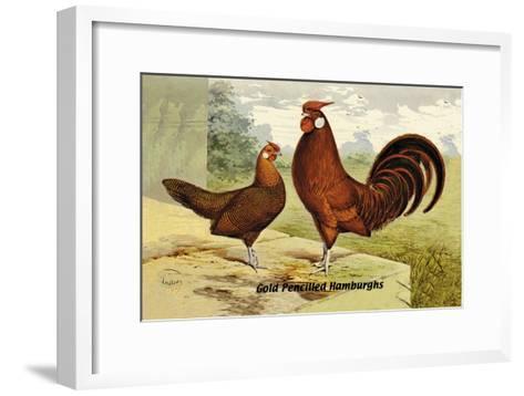 Gold Pencilled Hamburghs--Framed Art Print