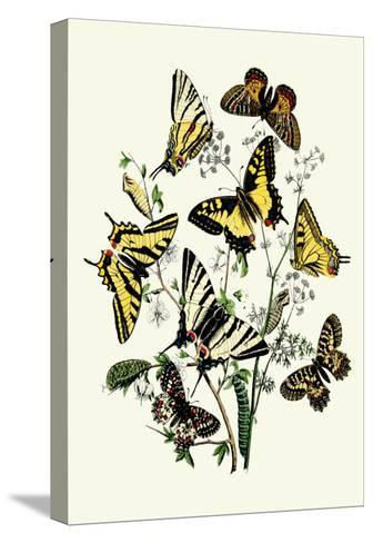 Butterflies: P. Podaliris, P. Alexanor-William Forsell Kirby-Stretched Canvas Print