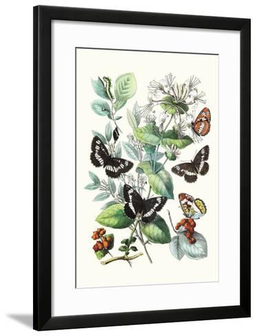 Butterflies: N. Lucilla, L. Sibylla-William Forsell Kirby-Framed Art Print