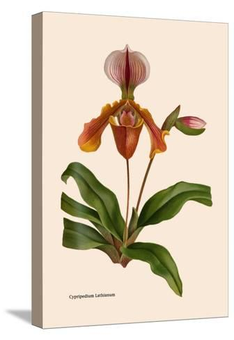 Orchid: Cypripedium Lathianum-William Forsell Kirby-Stretched Canvas Print