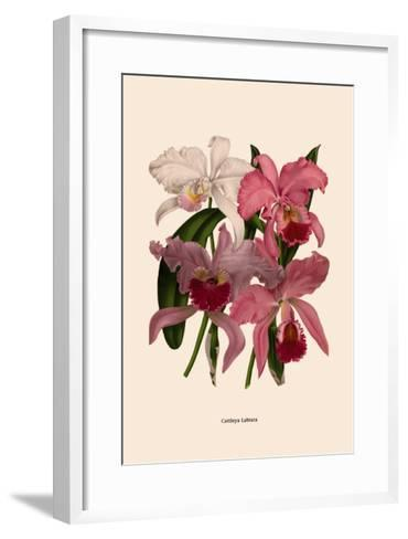 Orchid: Cattleya Labiata--Framed Art Print