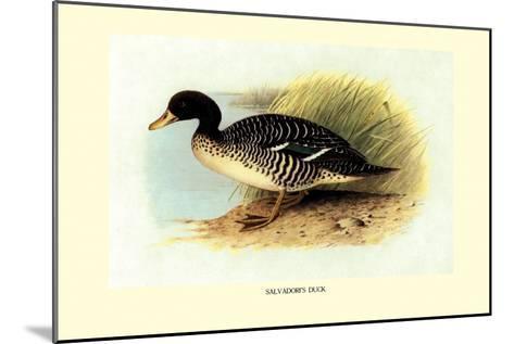 Salvadori's Duck-Henrick Gronvold-Mounted Art Print