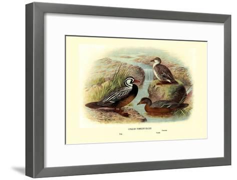 Chilean Torrent Ducks-Henrick Gronvold-Framed Art Print