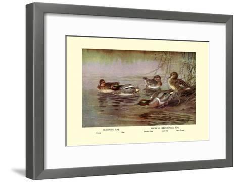 European and American Teal Duck-Allan Brooks-Framed Art Print