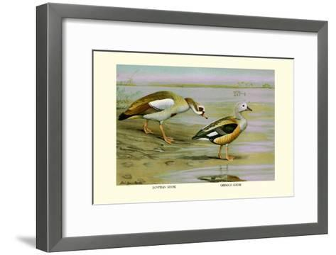 Egyptian and Orinoco Goose-Louis Agassiz Fuertes-Framed Art Print