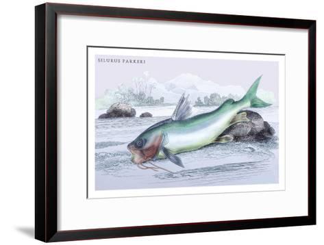Silurus Parkeri-Robert Hermann Schomburgk-Framed Art Print