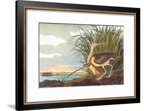 Long-Billed Curlew-John James Audubon-Framed Art Print