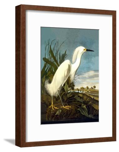 Snowy Egret-John James Audubon-Framed Art Print