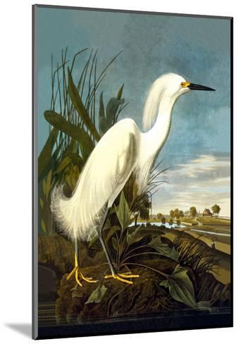 Snowy Egret-John James Audubon-Mounted Art Print