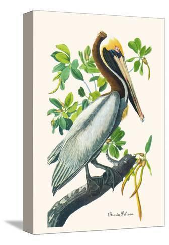 Brown Pelican-John James Audubon-Stretched Canvas Print