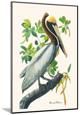 Brown Pelican-John James Audubon-Mounted Art Print