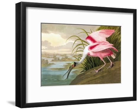 Roseate Spoonbill-John James Audubon-Framed Art Print