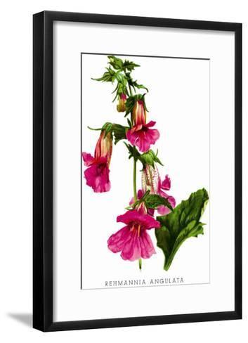 Rehmannia Angulata-H^g^ Moon-Framed Art Print