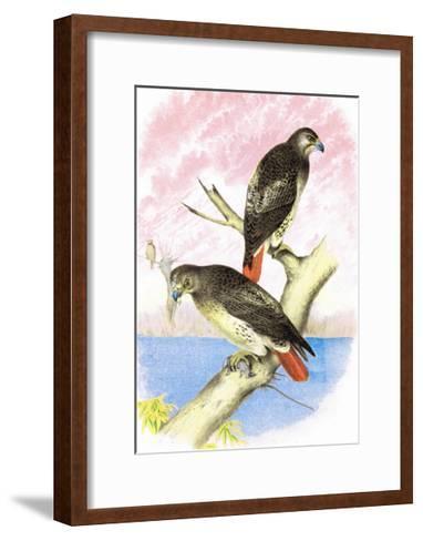 Red-Tailed Hawks-Theodore Jasper-Framed Art Print