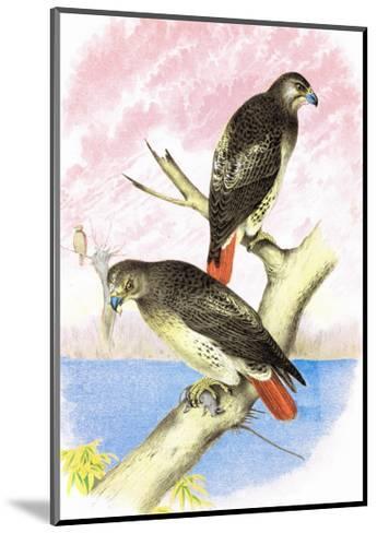 Red-Tailed Hawks-Theodore Jasper-Mounted Art Print