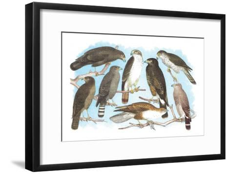 Coopers, Grubers, Harlan and Harris Buzzards, and Chicken Hawk-Theodore Jasper-Framed Art Print