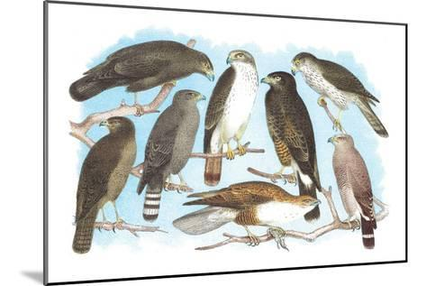 Coopers, Grubers, Harlan and Harris Buzzards, and Chicken Hawk-Theodore Jasper-Mounted Art Print
