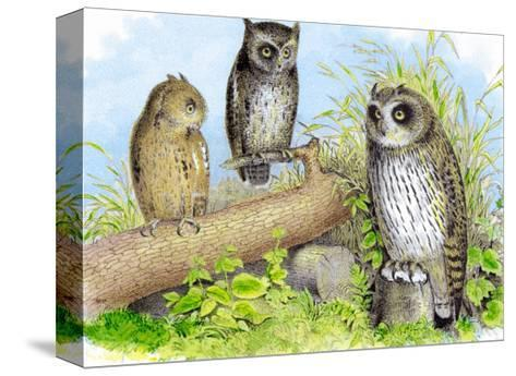 Short-Eared Owl and Screech Owl-Theodore Jasper-Stretched Canvas Print