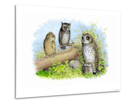 Short-Eared Owl and Screech Owl-Theodore Jasper-Metal Print