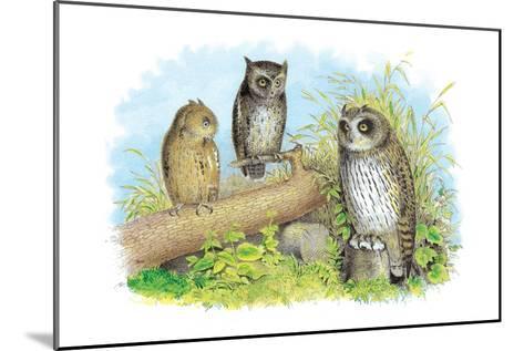 Short-Eared Owl and Screech Owl-Theodore Jasper-Mounted Art Print