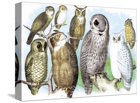 Hoot of Owls-Theodore Jasper-Stretched Canvas Print