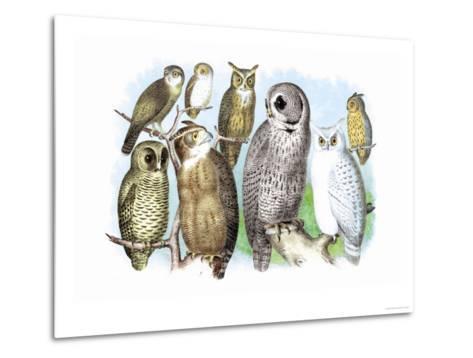 Hoot of Owls-Theodore Jasper-Metal Print
