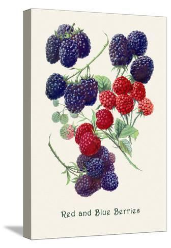 Red and Blue Berries--Stretched Canvas Print