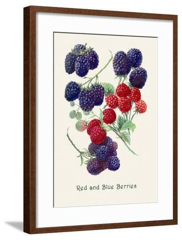 Red and Blue Berries--Framed Art Print