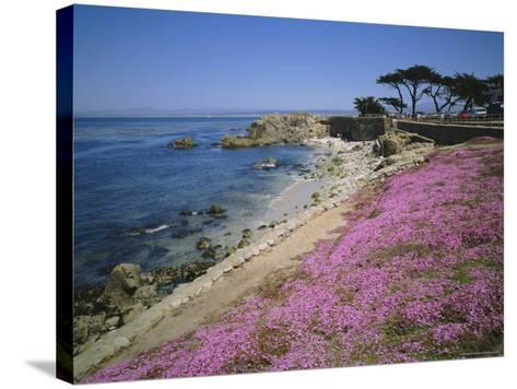 Carpet of Mesembryanthemum Flowers, Pacific Grove, Monterey, California, USA-Geoff Renner-Stretched Canvas Print