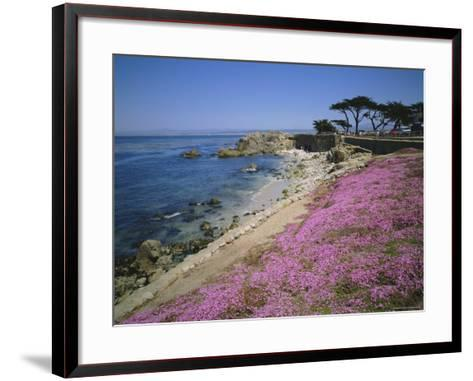 Carpet of Mesembryanthemum Flowers, Pacific Grove, Monterey, California, USA-Geoff Renner-Framed Art Print