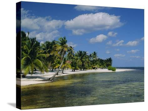 Main Dive Site in Belize, Ambergris Caye, Belize, Central America-Gavin Hellier-Stretched Canvas Print