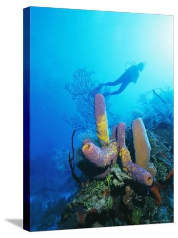Coral Formations and Underwater Diver, Cozumel Island, Caribbean Sea, Mexico-Gavin Hellier-Stretched Canvas Print