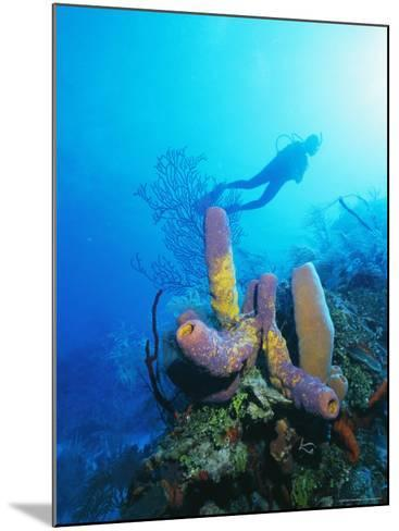 Coral Formations and Underwater Diver, Cozumel Island, Caribbean Sea, Mexico-Gavin Hellier-Mounted Photographic Print