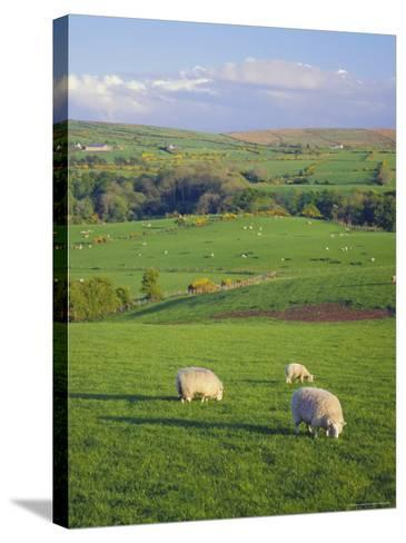 Farming Countryside, County Antrim, Northern Ireland-Gavin Hellier-Stretched Canvas Print